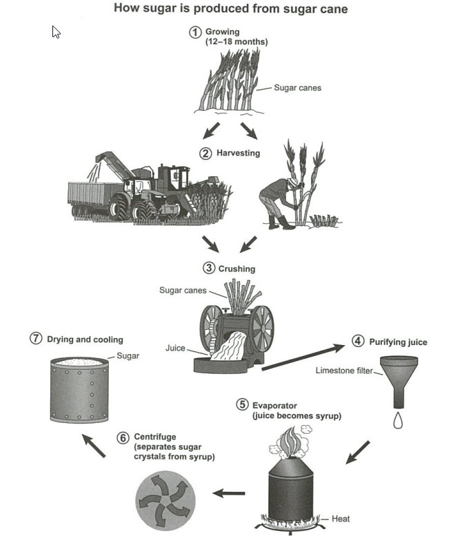 The Manufacturing Process for Making Sugar From Sugar Cane