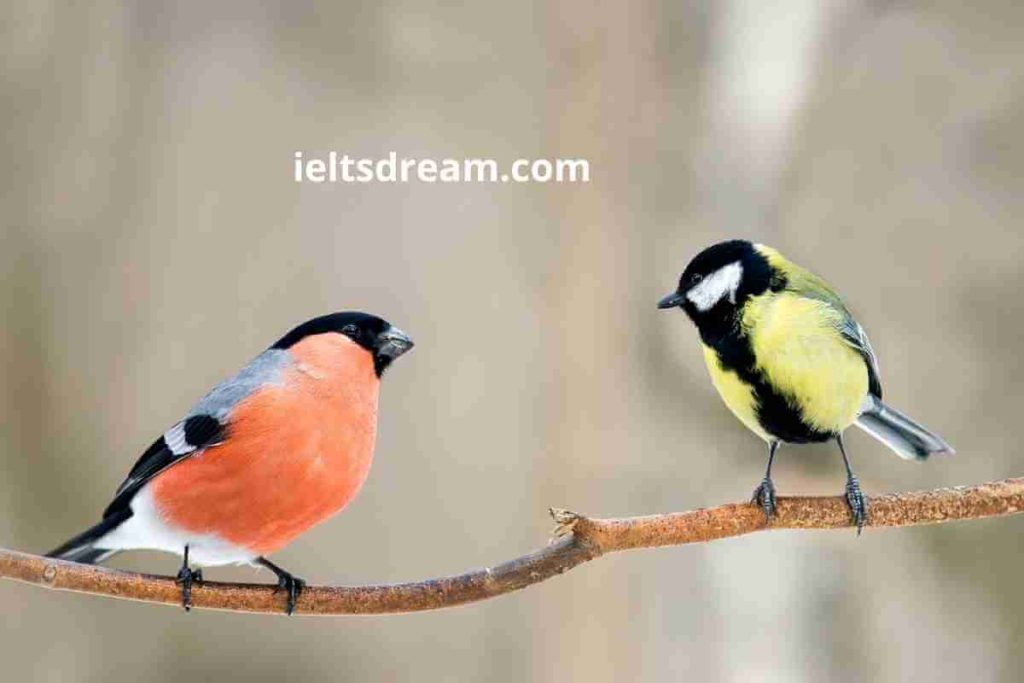 Birds IELTS Speaking Part 1 Questions With Answer (3) (1)